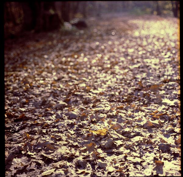 Herbstglut